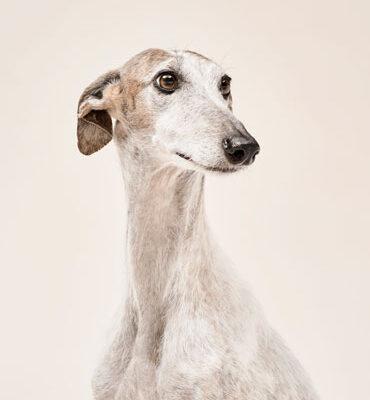 especialistas-animales-370x500